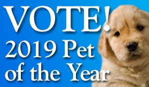 2019 Pet of the Year Contest