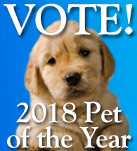 2018 Pet of the Year Contest