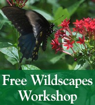 Wildscapes Workshop