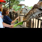 Alex Daily enjoying the giraffes.
