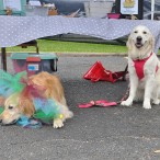 Golden Beginnings Golden Retriever Rescue
