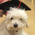 Yogis graduation day from Petsmart