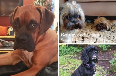 Pet of the Year Contest Winners