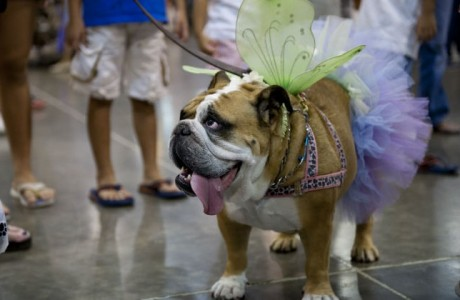 Show Dogs Rival to Rule NRG Park