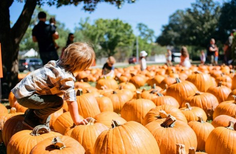 Pumpkin Patch at St. Luke's United Methodist Church