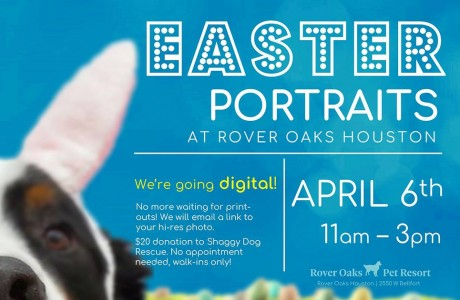 Doggie Pictures with the Easter Bunny at Rover Oaks Houston