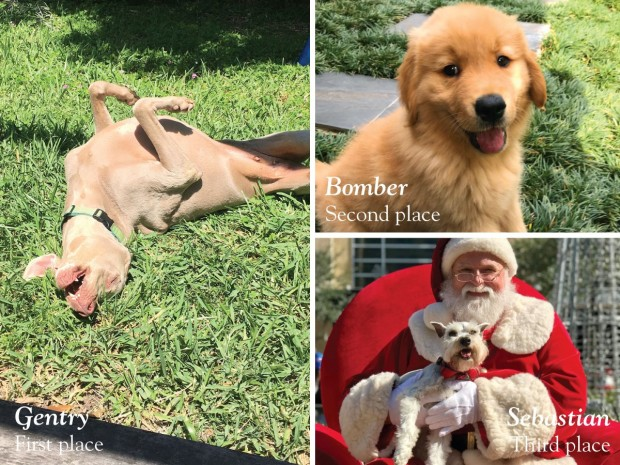 2019 Pet of the Year Contest Winners