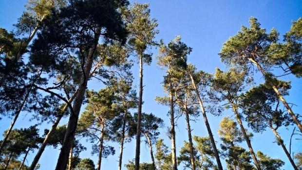 Memorial Park 101: Tree Talk